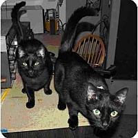 Adopt A Pet :: Sherry - Gaithersburg, MD