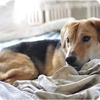 Adopt A Pet :: Houdini - Toronto/Etobicoke/GTA, ON