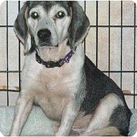 Adopt A Pet :: Ollie - Orlando, FL