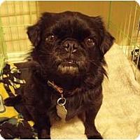 Adopt A Pet :: Vader - Hales Corners, WI
