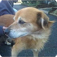 Adopt A Pet :: Zeebo - Adoption Pending - Wapwallopen, PA