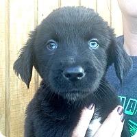 Adopt A Pet :: Trevor - Morgantown, WV