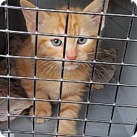 Adopt A Pet :: Roscoe - Portland, OR