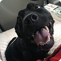 Adopt A Pet :: Hope - Fredericksburg, VA