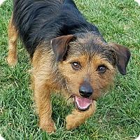 Adopt A Pet :: Max - Oakley, CA