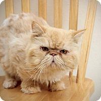 Adopt A Pet :: Dudley O'Brien - San Antonio, TX