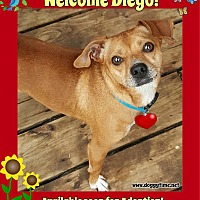 Adopt A Pet :: Diego - Warkworth, ON