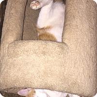 Adopt A Pet :: Gunner - Sedalia, MO