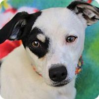 Adopt A Pet :: IKE - Red Bluff, CA