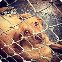 Adopt A Pet :: Summer - Minneapolis, MN