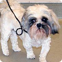 Adopt A Pet :: Stache - Wildomar, CA