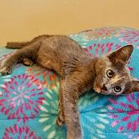 Adopt A Pet :: Iris - Lodi, CA
