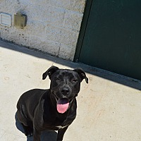 Adopt A Pet :: Fancy - Bowie, TX