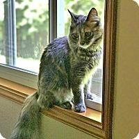 Calico Cat for adoption in Mill Creek, Washington - *Delilah
