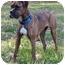 Photo 2 - Boxer Dog for adoption in Mocksville, North Carolina - Sadie