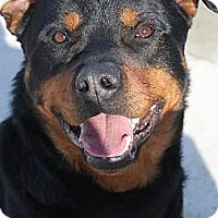 Adopt A Pet :: Duff - Spring City, PA