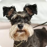 Adopt A Pet :: Peaches - Rigaud, QC