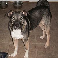Adopt A Pet :: Sox - Parsippany, NJ