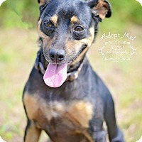 Adopt A Pet :: Oscar - Fort Valley, GA