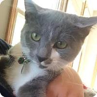Adopt A Pet :: Lilah - Harrisonburg, VA