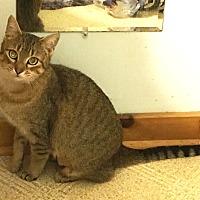 Adopt A Pet :: Tabitha - Wayland, MI
