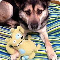 Adopt A Pet :: Skye - Fennville, MI