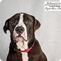 Adopt A Pet :: Buster - North Myrtle Beach, SC