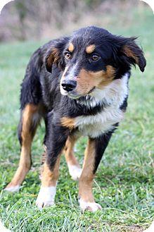 Collie Mix Dog for adoption in Waldorf, Maryland - Ursula