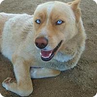 Adopt A Pet :: Lawson - Romoland, CA