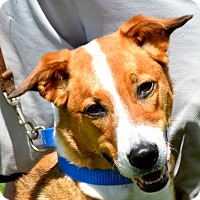 Adopt A Pet :: Ethan - Huntley, IL