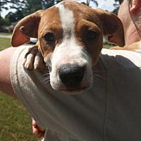 Adopt A Pet :: Cricket CC CP - Providence, RI