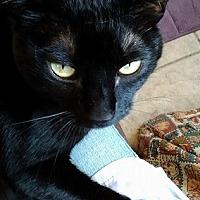 Adopt A Pet :: Uno - Canon City, CO