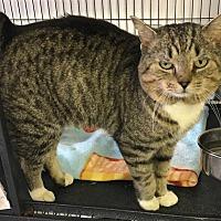 Adopt A Pet :: Harvey - Bourbonnais, IL