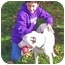 Photo 4 - American Staffordshire Terrier/Pointer Mix Puppy for adoption in Redondo Beach, California - Jerry