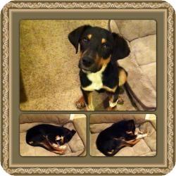 Hound (Unknown Type) Mix Dog for adoption in Hancock, Michigan - Flick