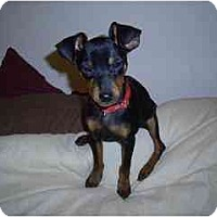 Adopt A Pet :: Soldier - Phoenix, AZ