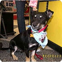 Adopt A Pet :: Minnie N mickey - Scottsdale, AZ