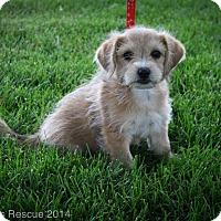 Adopt A Pet :: MULAN - Broomfield, CO