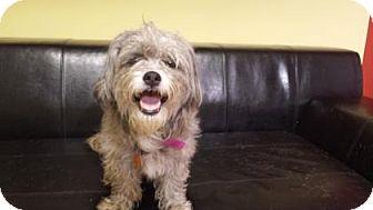 Shih Tzu Mix Dog for adoption in Philadelphia, Pennsylvania - Alandy
