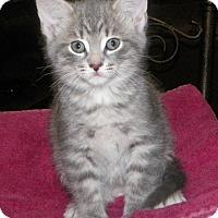 Adopt A Pet :: Marshmellow - Dover, OH