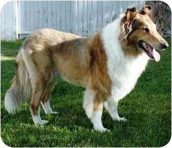 Collie Mix Dog for adoption in Gardena, California - Lonnie