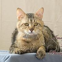 Domestic Mediumhair Cat for adoption in Crescent, Oklahoma - Hank