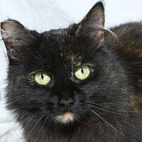 Adopt A Pet :: Simone L - Sacramento, CA
