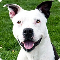 Adopt A Pet :: Mary - Meridian, ID