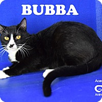Adopt A Pet :: Bubba - Carencro, LA
