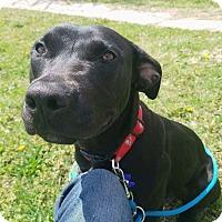 Adopt A Pet :: Patty - Wichita, KS