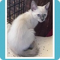 Adopt A Pet :: Puma - Scottsdale, AZ