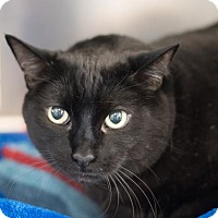 Adopt A Pet :: Melvin - Chico, CA