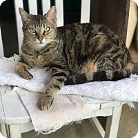 Adopt A Pet :: Asia - Calimesa, CA
