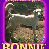 Adopt A Pet :: BONNIE - Sebec, ME